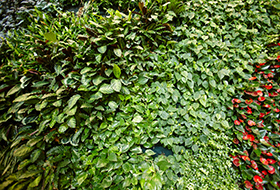 Green Wall High Tech Campus Villach 2